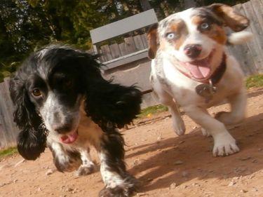 Dog Mountain Lodge Dog Boarding Services